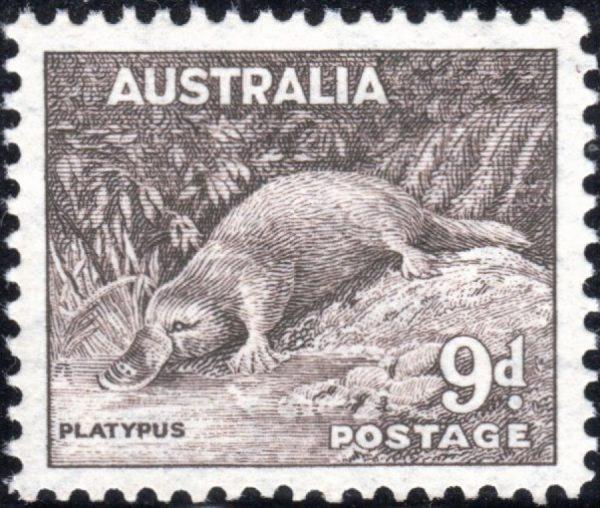 9d Platypus p 14 x 13½
