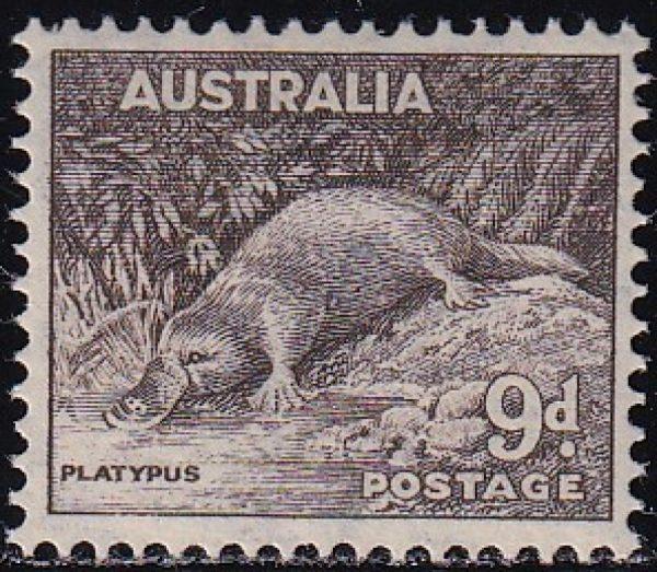 9d Platypus p 14 x 15