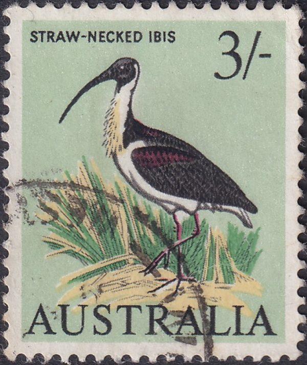 3/- Straw-necked Ibis
