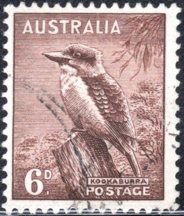 6d Kookaburra - No Watermark