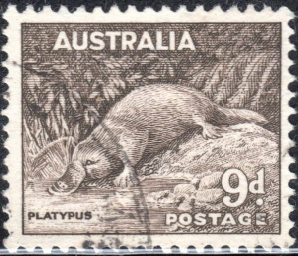 9d Platypus - No Watermark