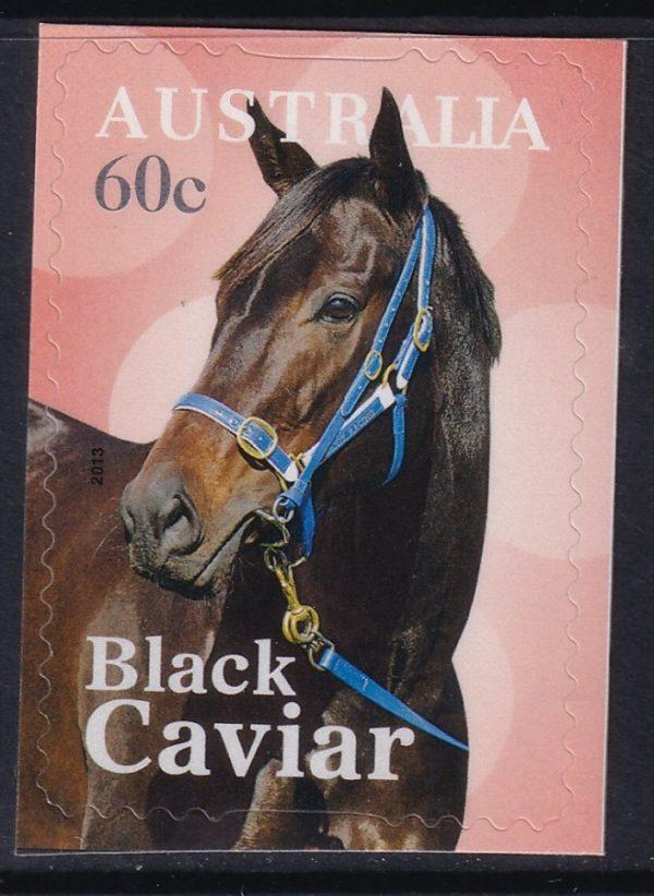 Black Cavier - Self Adhesive